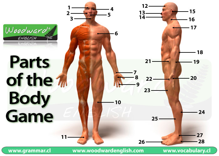 Parts Of The Body Picture Game English Vocabulary